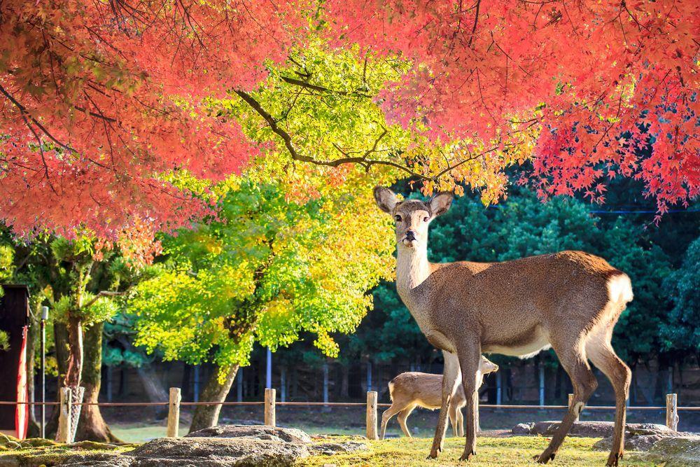 Autumn  Mount Yoshino (Nara Prefecture)