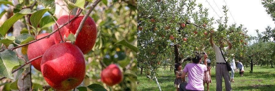 Aomori Hirosaki Apple Park