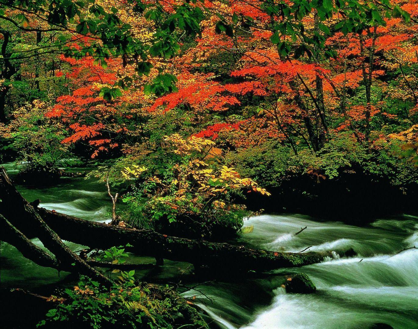 Japan Oirase Keiryu (Aomori Prefecture)