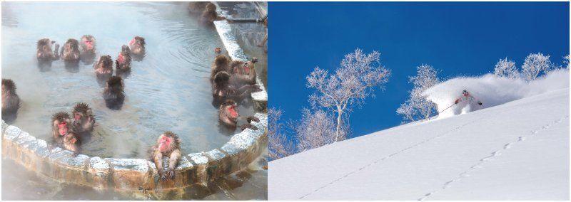 Tohoku Onsen Ski Winter Japan