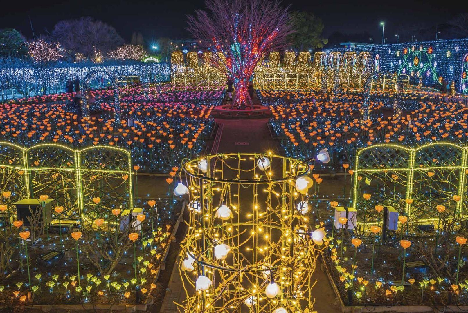 Winter Illuminations in Japan