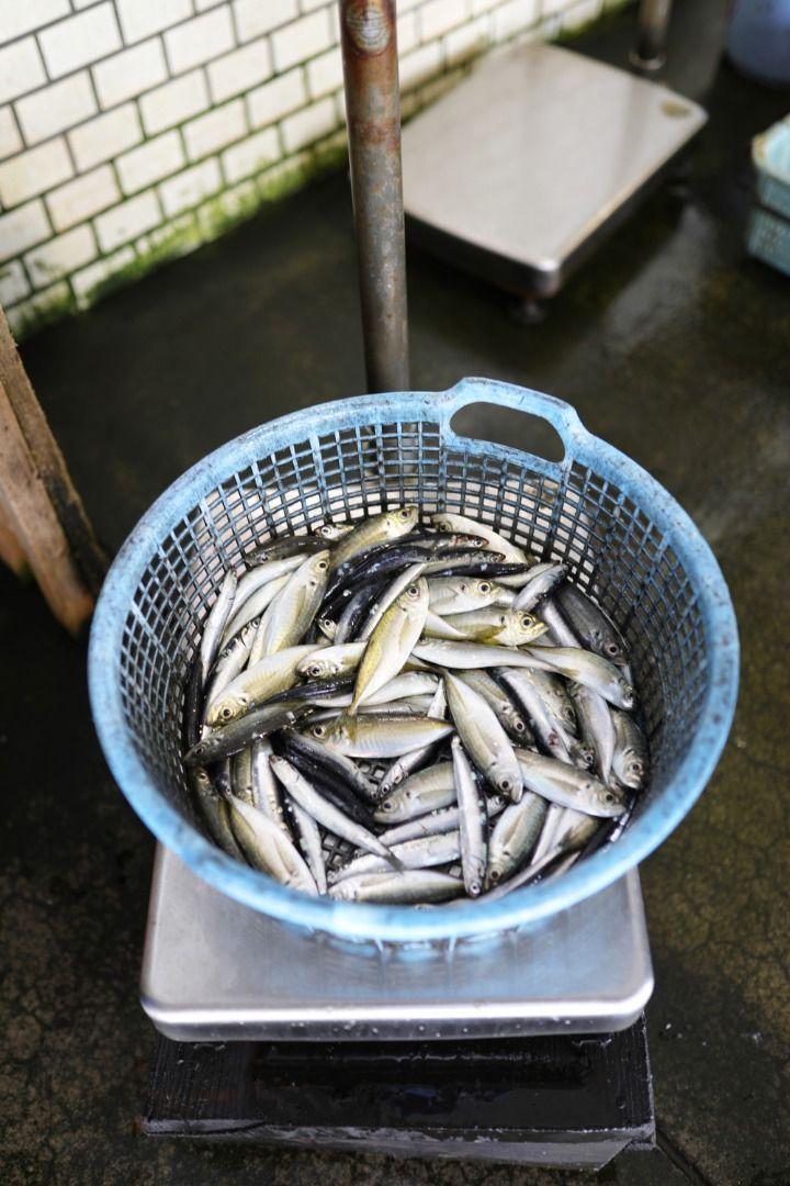 Kyoto The Funaya of Ine Fish
