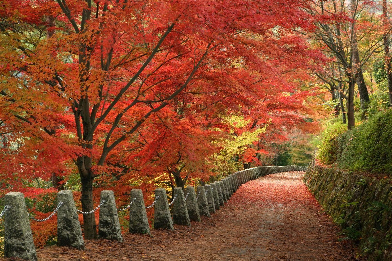Equally Breathtaking in Autumn Mount Yoshino (Nara Prefecture)