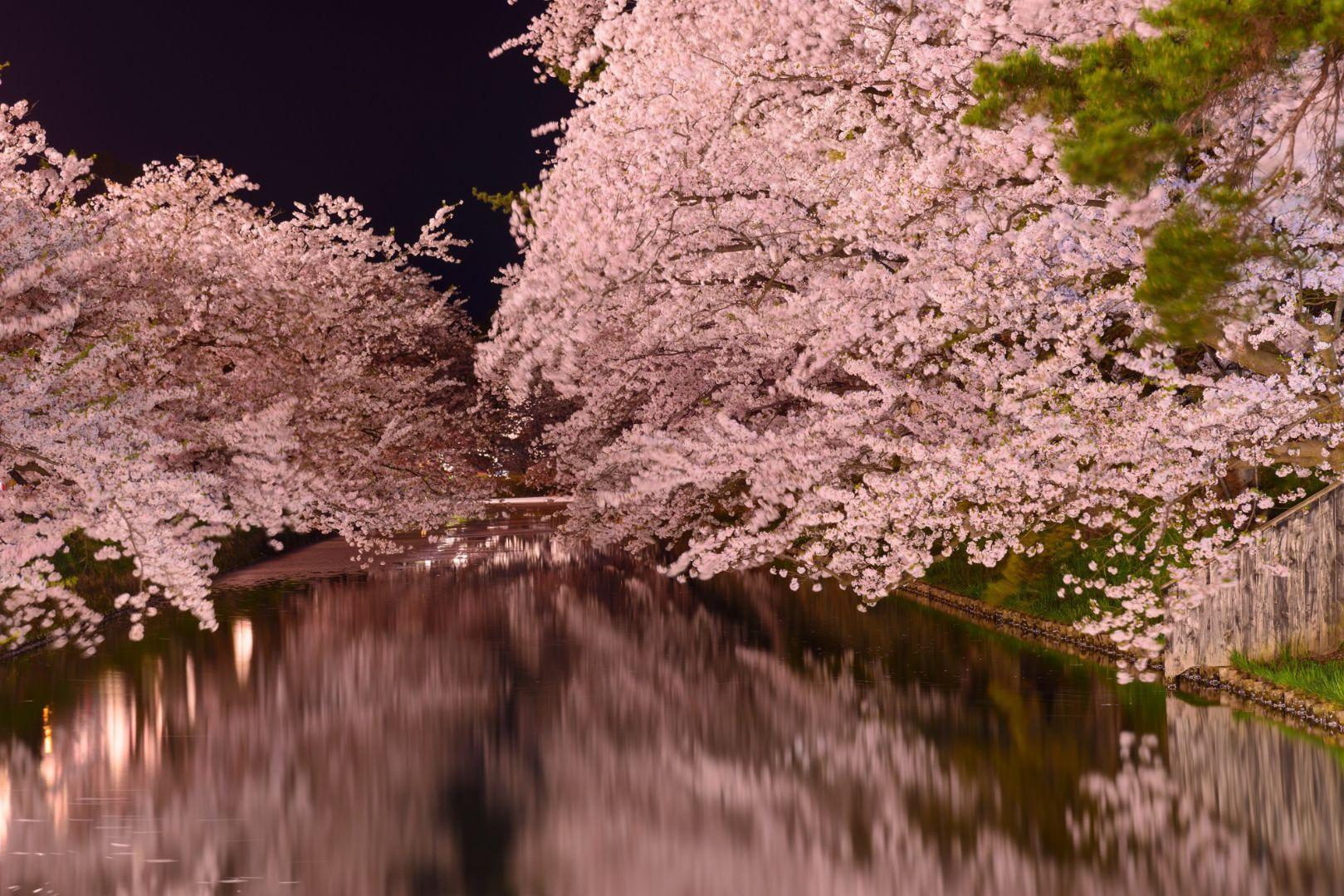hiriosaki park sakura Cherry Blossoms