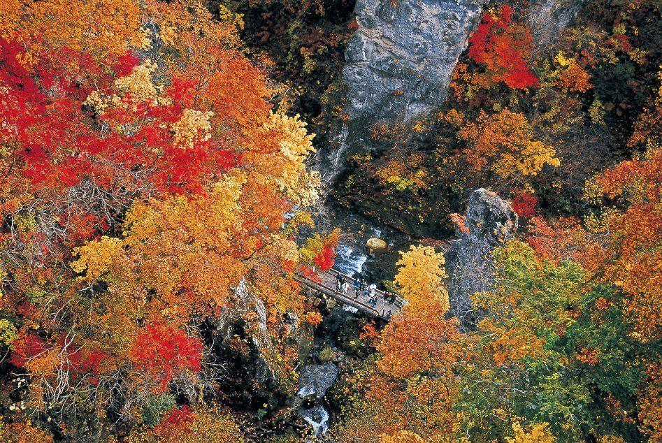 Autumn Leaves Naruko kyo