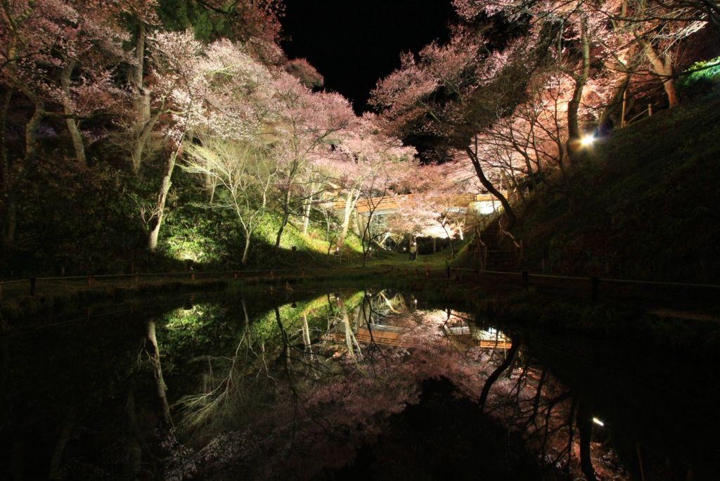 The Takato Kohiganzakura at Takato Castle Park Sakura Festival (Nagano Prefecture)