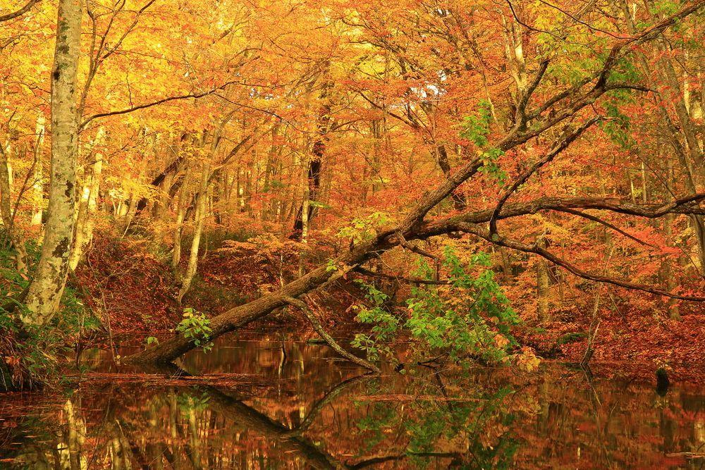 Japan Autumn Tsutanuma (Aomori Prefecture)