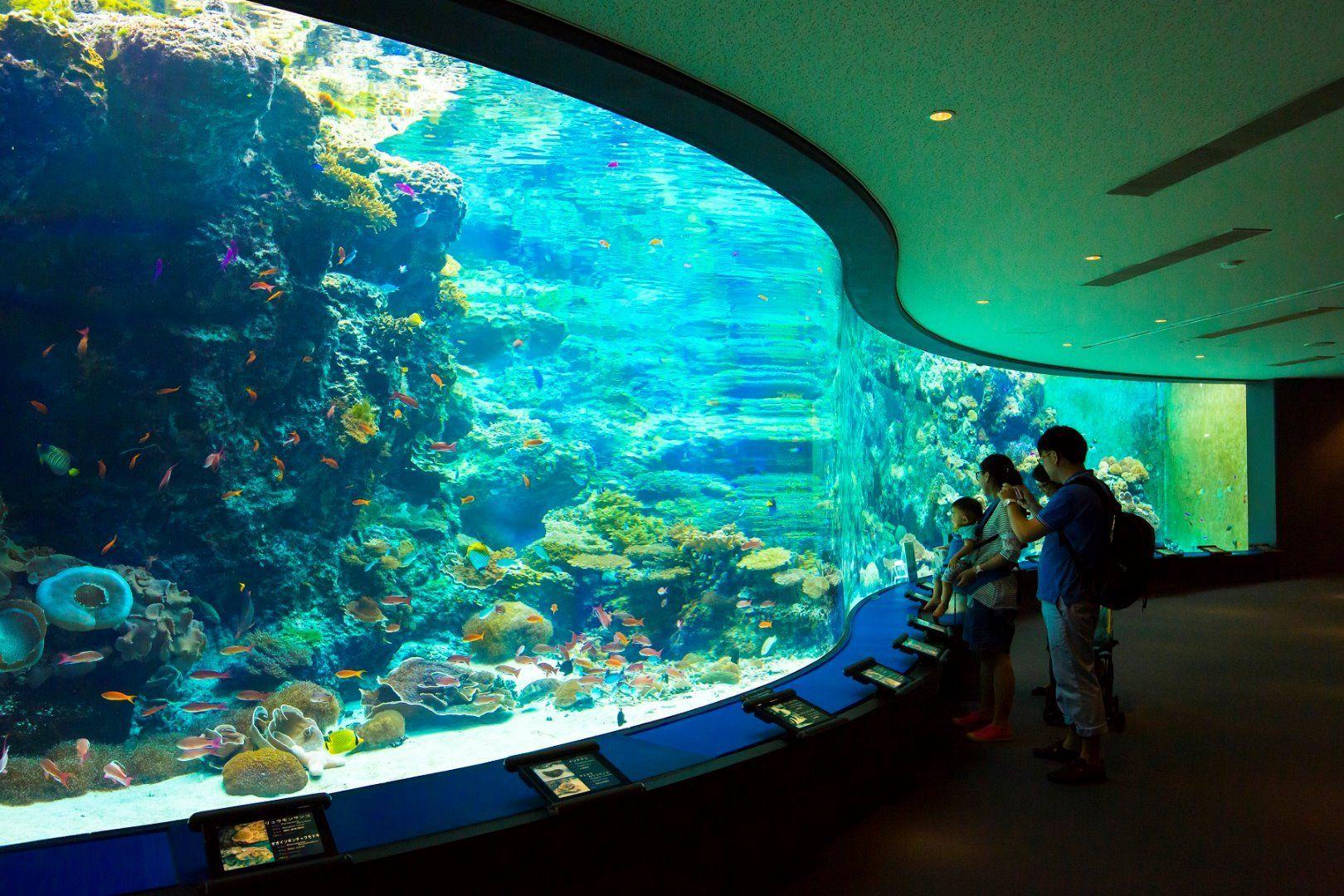 Japan Okinawa Churami Aquarium
