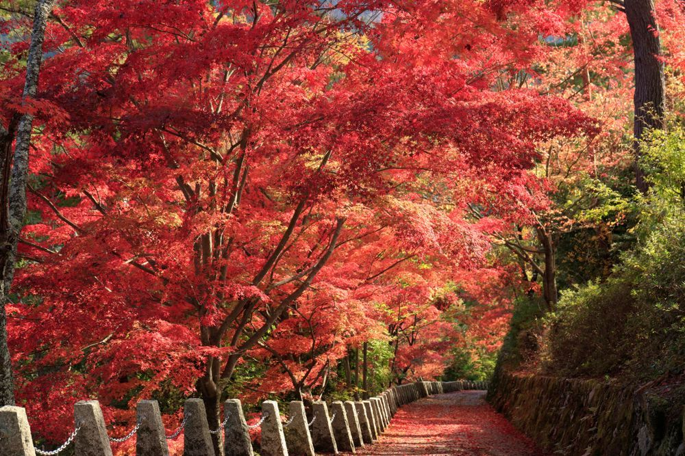 UNESCO-Designated! Enjoy Spectacular Autumn Colours and World Heritage Sites on Japan's Mountains