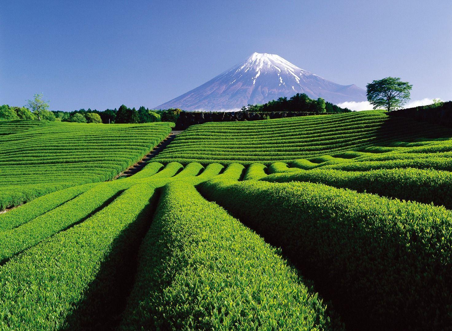 Shizuoka or Yamanashi?Which area should I choose: Shizuoka or Yamanashi?