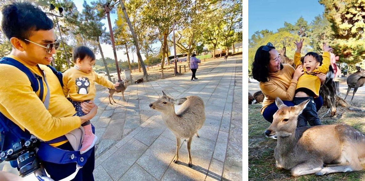 """Day 4 - Oh, my """"deer"""" Nara!"""
