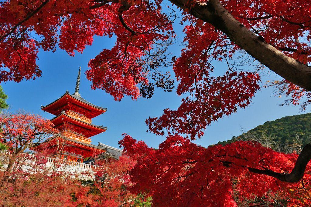 sceneries of autumn leaves Kiyomizudera