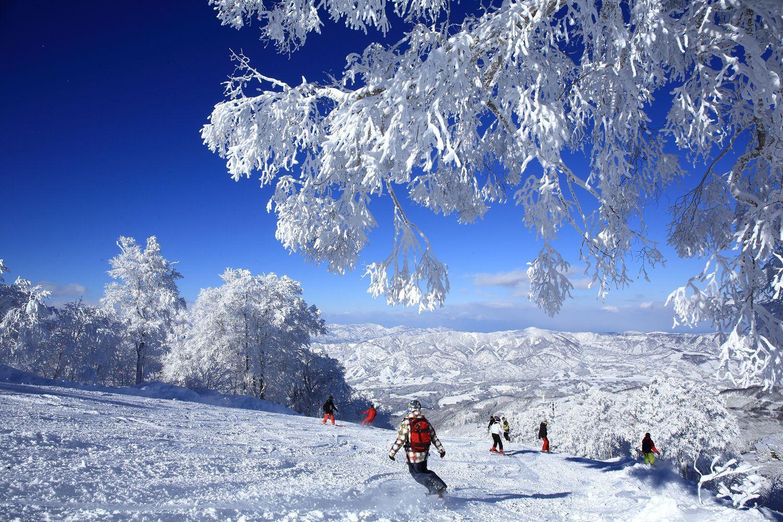 """Ski Resort in a Town of Hot Spring! """"NOZAWA ONSEN SNOW RESORT"""""""